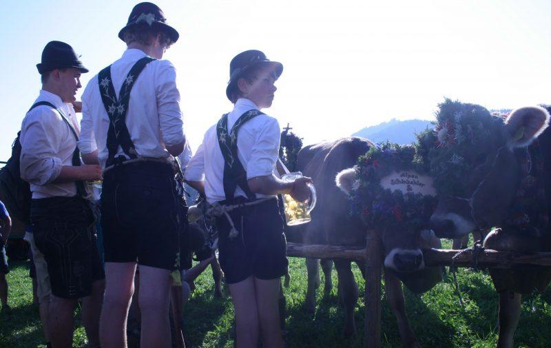 Viehscheid und Bergkäse