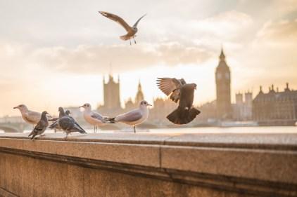 Anecdotes sur Londres