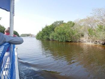 Everglades - Dauphins