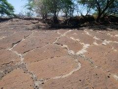 Puako Petroglyph
