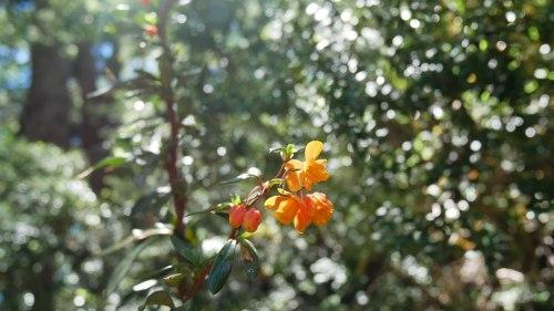 Huerquehue et sa végétation