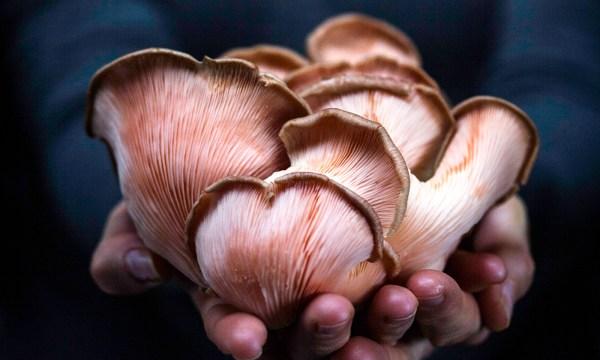mushrooms_tewa.jpg