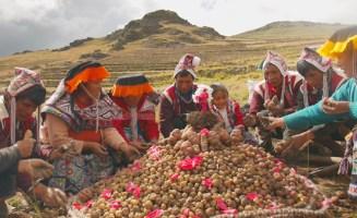 Indigenous seed savers