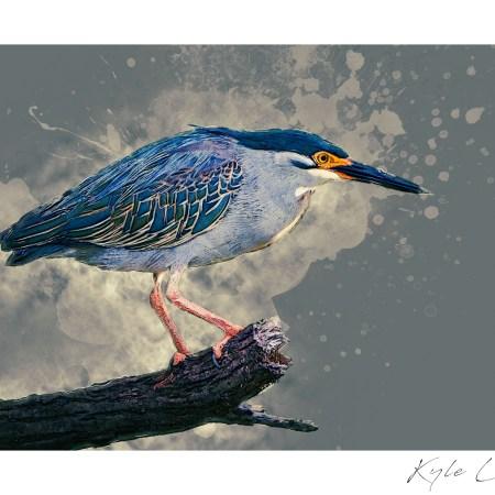Digital art of a green backed heron.