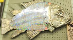 CD Fish (3)