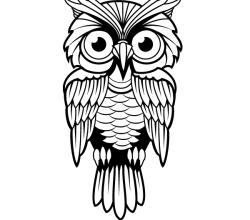 Vector Owl Image