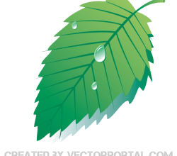 Green Leaf with Water Drops Vector
