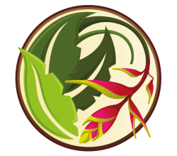 Vector Tropical Flower Graphics