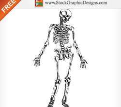Hand Drawn Human Skeleton Free Vector Illustration