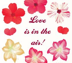 Free Hibiscus Flowers Vector  Download