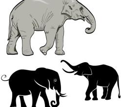 Vector Elephant Image