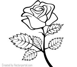 Rose Outline Vector Image