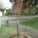 Tree Ready to Grow