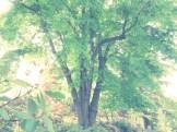 Yellowwood (33)