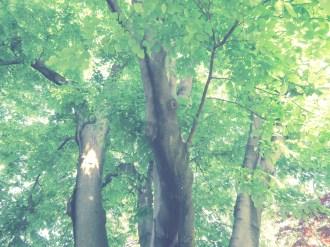 Yellowwood (6)