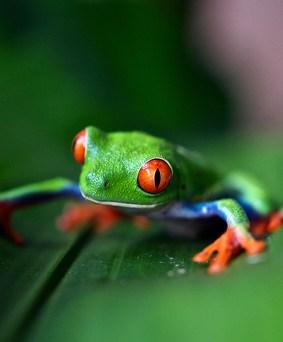 Biodiversité entre Caraïbes et Pacifique