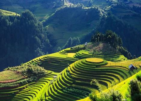 Rizières en terrasses de Mu Cang Chai, randonnée au Vietnam avec Nirvatravel