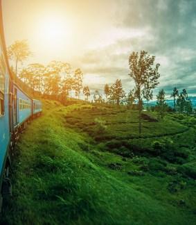 Sri Lanka, cette île de rêve