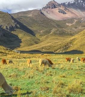 Cordillère des Andes et Amazonie