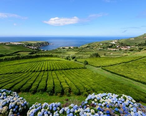 Les plantations de thé de Formoso sur l'ile de Sao Miguel, séjour aux Acores au Portugal avec Nirvatravel