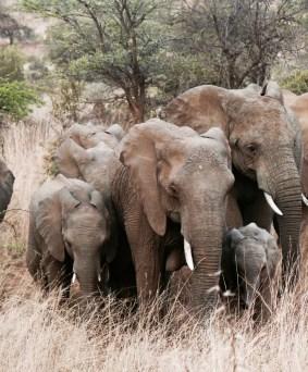 Safari dans le parc Boubadjida