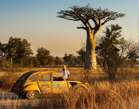 Allées des Baobabs à Morondava à Madagascar, voyage hors des sentiers battus Nirvatravel