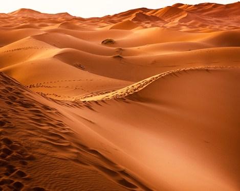 Dunes ocres du Sahara dans le Sud marocain, voyage au Maroc avec Nirvatravel