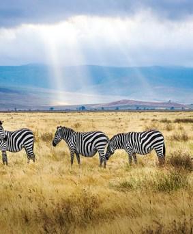 Serengeti et parcs tanzaniens du Nord