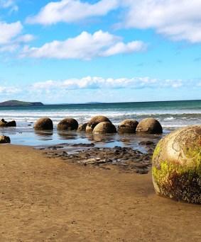 Autour de la culture Maorie