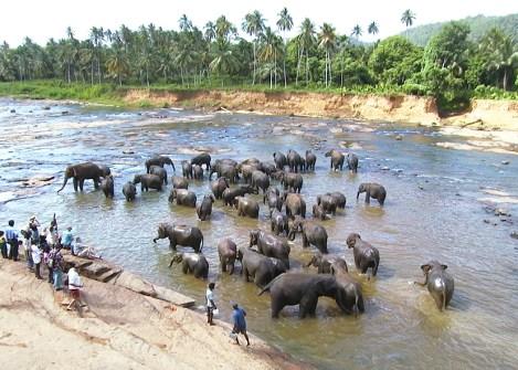 Eléphants dans le parc national d'Udawalawe, vacances au Sri Lanka avec une agence Nirvatravel
