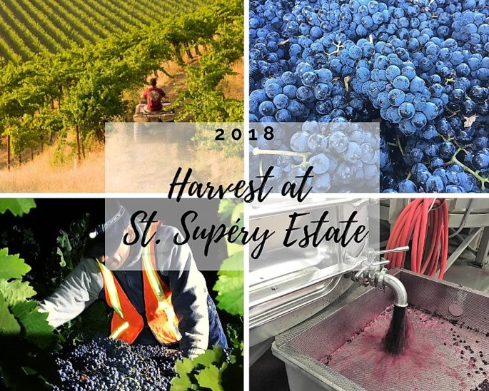 Harvest Happenings at St. Supéry Estate