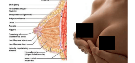 Here is everything you wanted to know about breasts