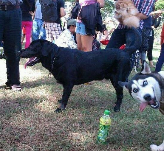 greatest photobomb ever