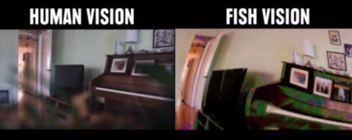 Human vision vs fish vision