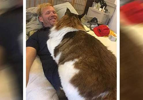 Meet Samson, the fattest and cutest cat in New York