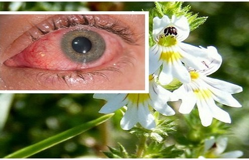 This miracle herb can cure many health issues effectively