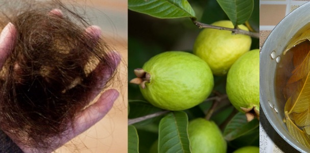 This method of using guava leaves is guaranteed to reduce hair loss and increase growth