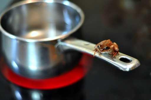 PM bonus boiling frog