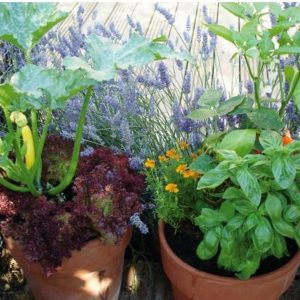 Growing produce in pots has many wonderful benefits