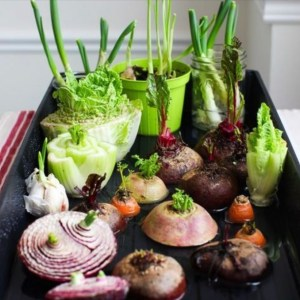 COVID-19 Tips: 11 Foods That You Can Buy and Re-Grow