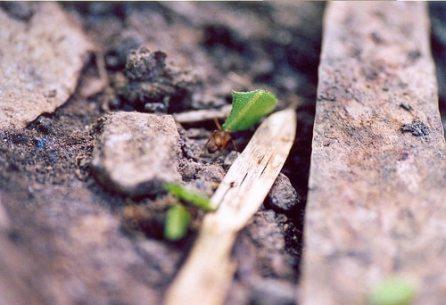 Pour réussir, adoptez la ténacité ... d'une fourmis