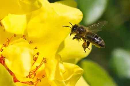 """Manque de constance ! Etes-vous victime du syndrome abeille ? Le manque de constance est très courant, c'est un peu une baeile qui change en permanence de fleur pour butiner ; elle ne reste jamais sur sa fleur"""""""