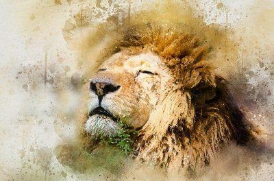 Image d'un lion fier