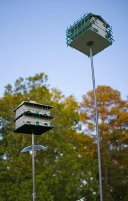 bird penthouse