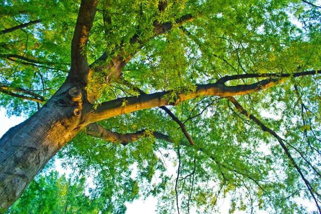 sunset on a tree