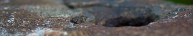 froggy sliver