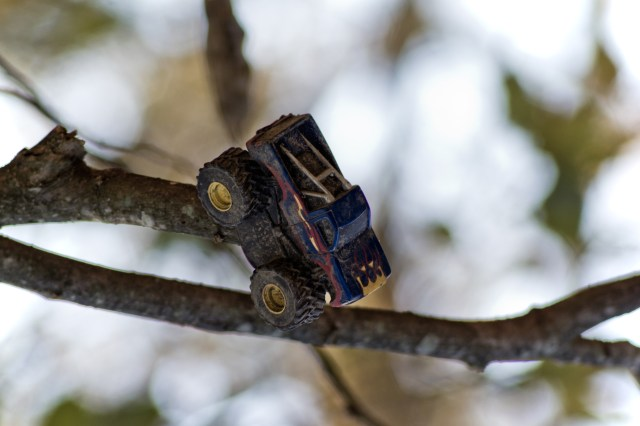 truck on a tree