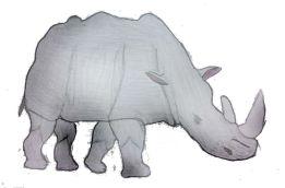 Bragaglia_rinoceronte