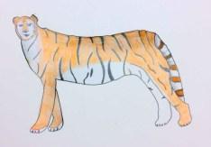 Cocchi_tigre