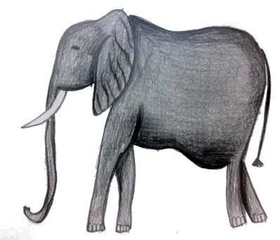 Graziani_elefante